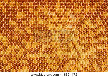 Background with golden cells of a honeycomb