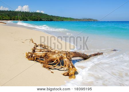 Tropical beach and ocean