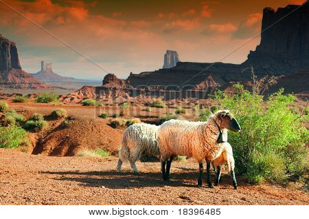 Sheep in Monument Valley at sunset