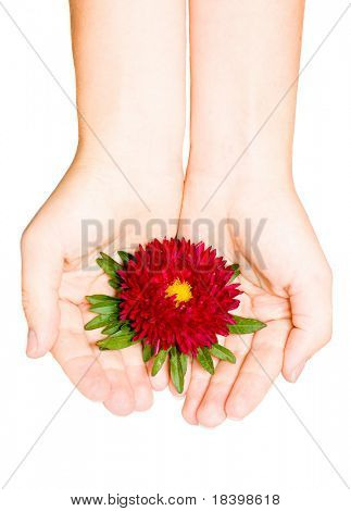 red flower in female hand