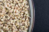 Fresh Green Buckwheat Sprouts In The Spoon Closeup. Raw Healthy Vegan Organic Diet. Healthy Vegetari poster
