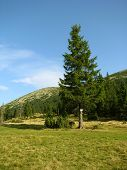 pasture in Gorgany region of Carpathian mountains