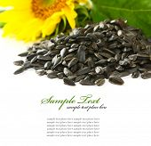 stock photo of sunflower-seeds  - sunflower isolated over white background - JPG