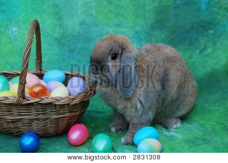 Close Up Of The Easter Bunny