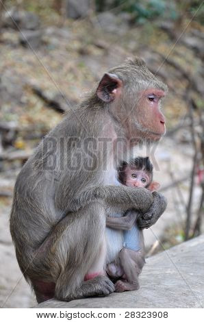 An Infant Monkey With It Mother.