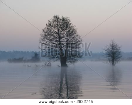 Reflection Of Trees On Lake At Dawn