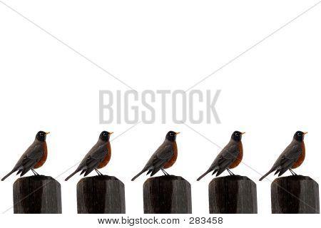Birdsposts
