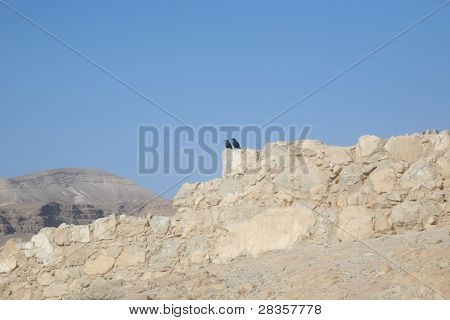 Two birds in the Masada fortress in Israel