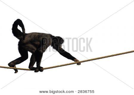 Macaco de escalada