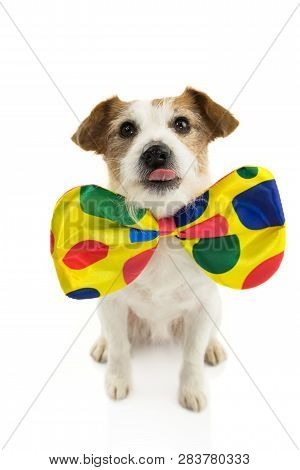 Funny Dog Dressed As A