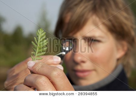 Ecologist Determined A Plant