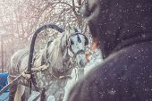 Dapple-gray Horse With Grey Mane Is Harnessed To Cart To Carry People On Snowy Day. Winter Holiday E poster