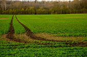 Dirt Road Path In Cereal Field Landscape In Spring. Tractor Tire Tracks On The Field In Latvia. Summ poster