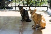 Two Little Cats Are Sitting On The Street. Lovely Cat. Cats Are Sitting On The Street. Red And Gray  poster