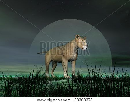 Lioness By Moonlight