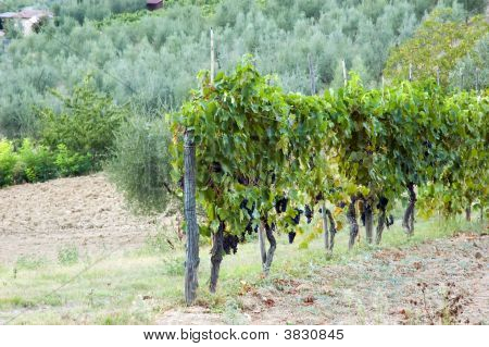 Vineyards Tuscany Italy Landscape