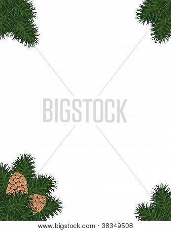 Pine Bough Frame