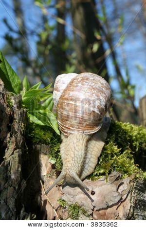 Creep Snail