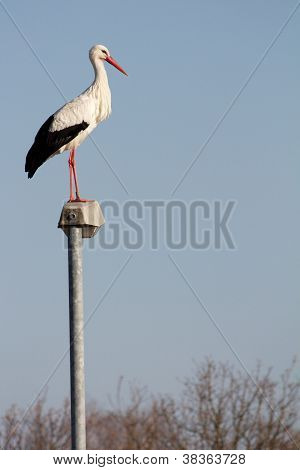 Stork on a streetlamp
