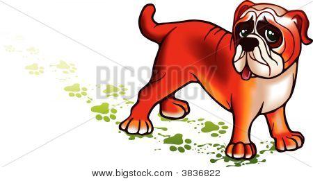 Schönen Hund