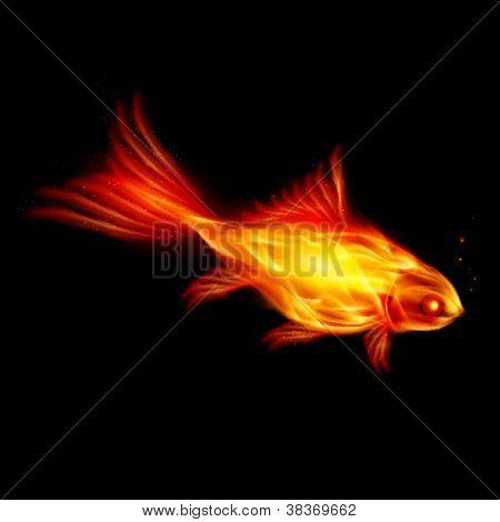 Burning fish