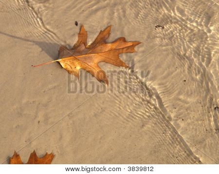 Autum Leaves Along The Shore