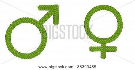 Gender Symbol Made of Four Leaf Clove