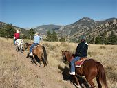 stock photo of appaloosa  - Mountain trail ride on horseback in Colorado - JPG