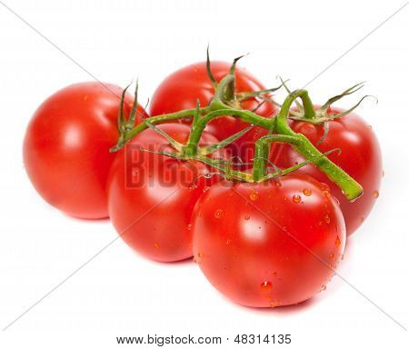 Ripe Tomato On Bunch With Water Drops