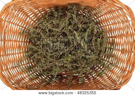 Rosemary In Basket