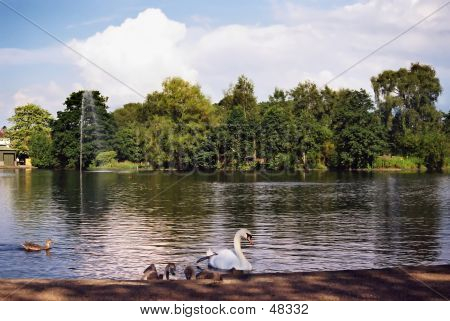 Birds On A Pond
