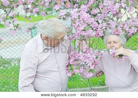 Old Woman Smell Flower