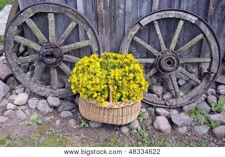 St John?s Wort Medical Flowers In Basket And Old Carriage Wheels