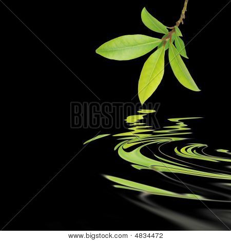 Bay Leaf Herb Abstract