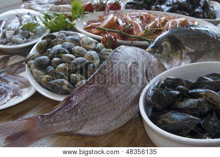 Mediterranean Bluefish