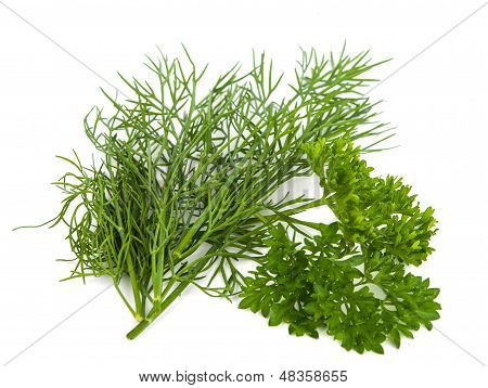 dill isolated on white., condiment, vertical, potherb,