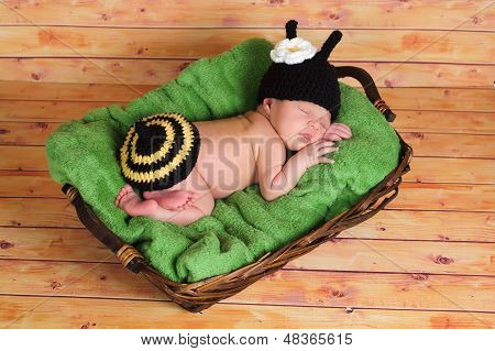 Newborn Baby Girl in a Bumblebee Costume