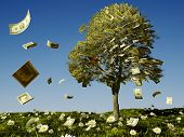 Money tree on grass with daisies.