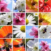Постер, плакат: Коллекция Весна цветов