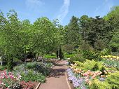 picture of duke  - Colorful flora in Duke Gardens - JPG