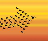 stock photo of geese flying  - Leadership and Synergy Concept Illustration  - JPG
