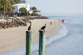 Two Seabirds On Posts Near Beach House
