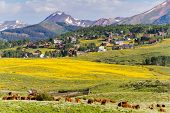 pic of landforms  - Valley covered with yellow wildflowers in Colorado - JPG