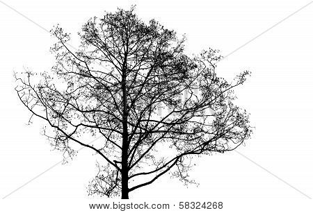 Black Leafless Tree Photo Silhouette On White Background