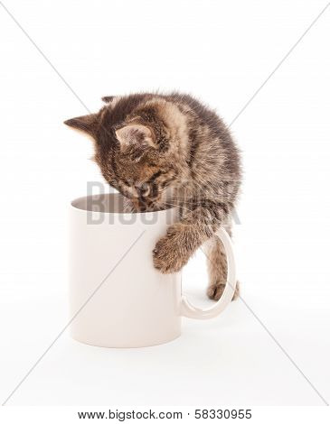 Kitten With Coffee Cup