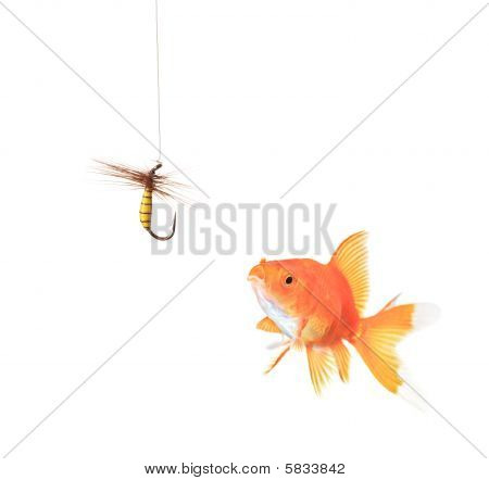 Golden fish and a fishing hook