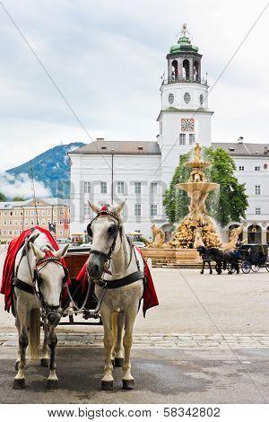Elegant Horses In Salzburg