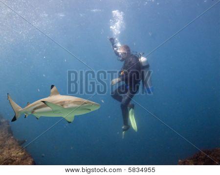 Sharkndiver