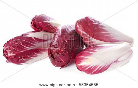 Chicory Carmine