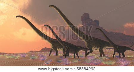 Mamenchisaurus Dinosaurs